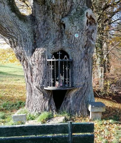 マリア像が神々しい楢の老木